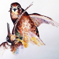 Merlin/woodcock Kill 0012